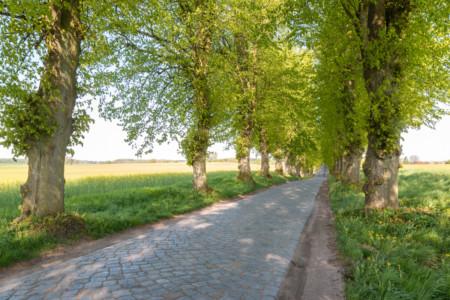 Allee in der Gemeinde Zülow